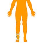 M_Body-O-Leg-Ankle_150x150