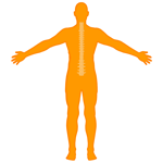 M_Body-OHSAL-Spine_150x150