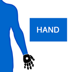 M_Body P Arm Hand_150x150